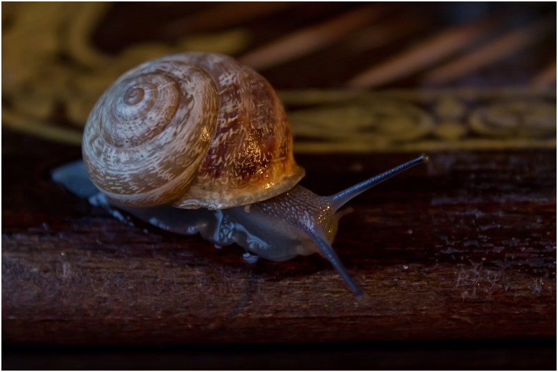 Photograph  Улитка / snail   №2 by Viktoria Imanova on 500px