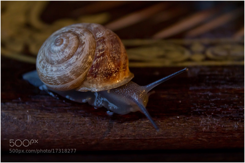 Photograph  Улитка / snail   №2 by Viktoria Imanova on 500px