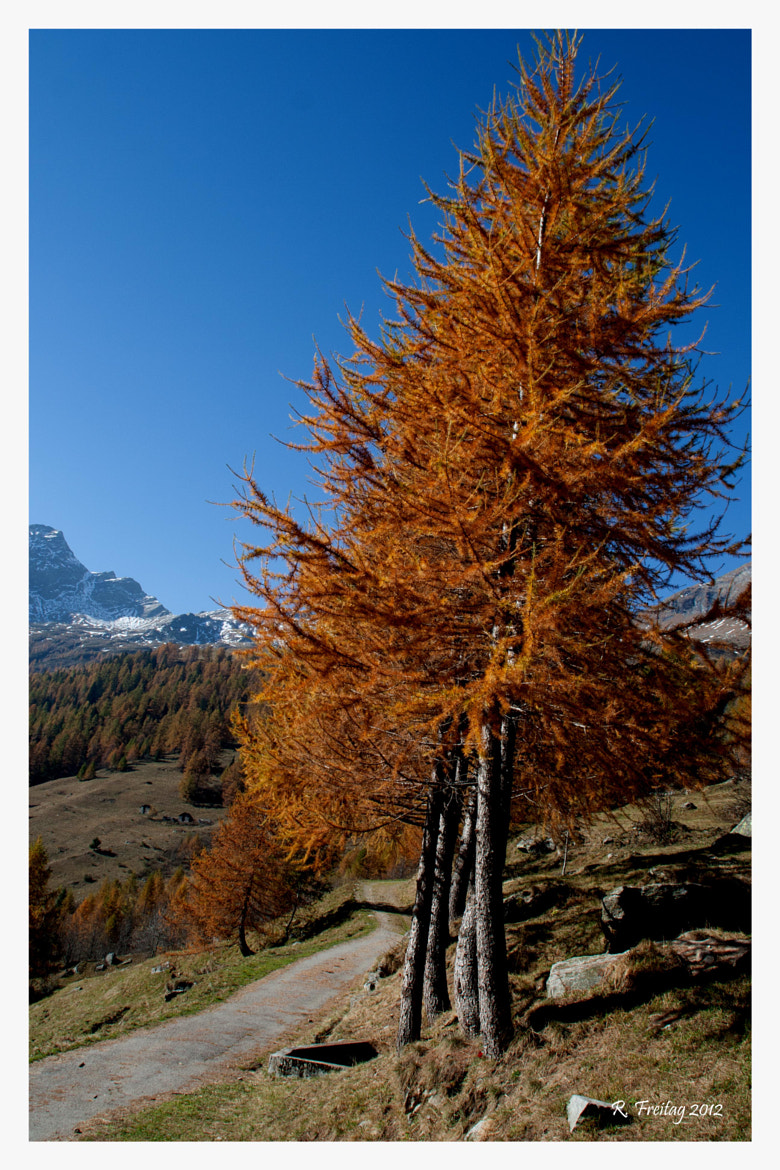 Photograph Golden Tree by Regina F on 500px