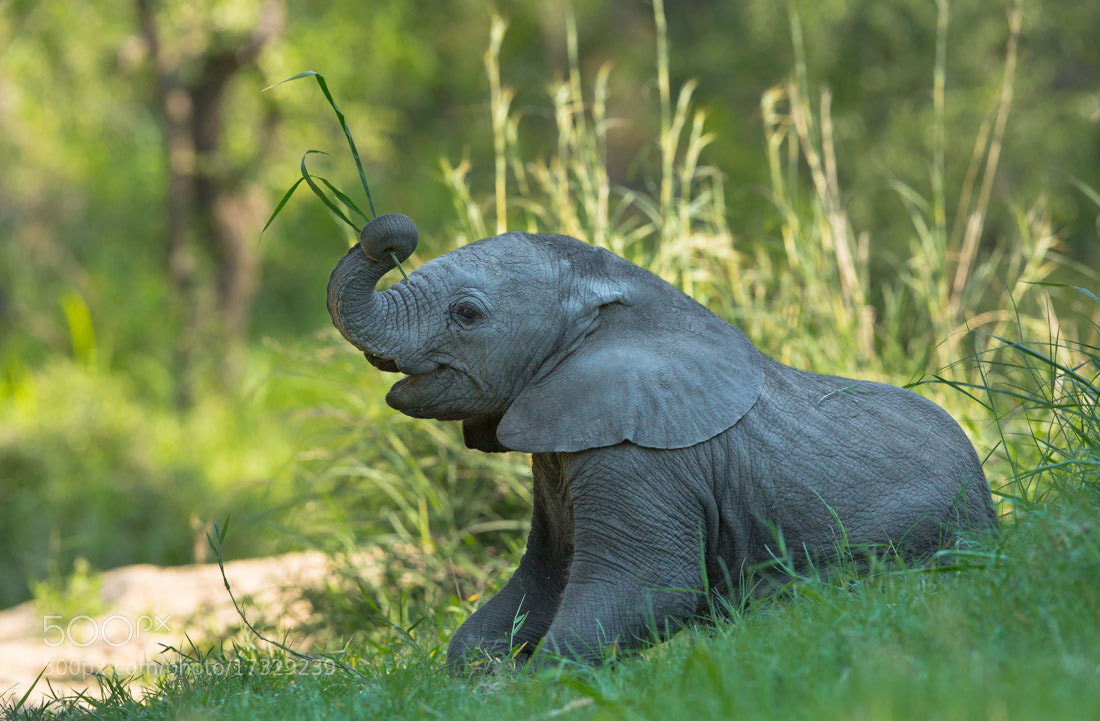 Photograph Ellie Fun by Marlon du Toit on 500px
