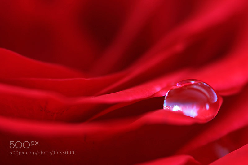 Photograph Water Droplet by Brian Curran on 500px