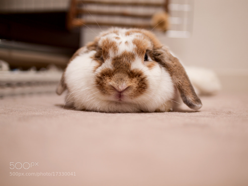 Photograph The flat body by rabbit portraits on 500px