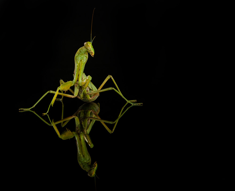 Photograph mantis5 by peyman shakoori on 500px