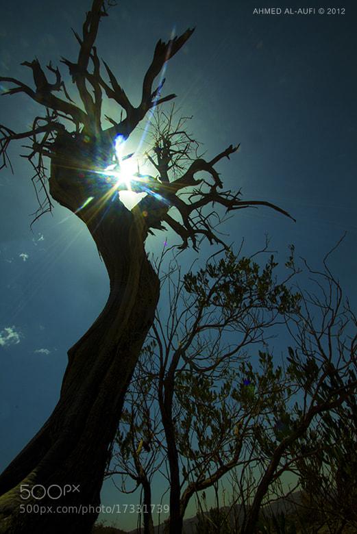 Photograph sun of the hope by AHMED AL-AUFI on 500px