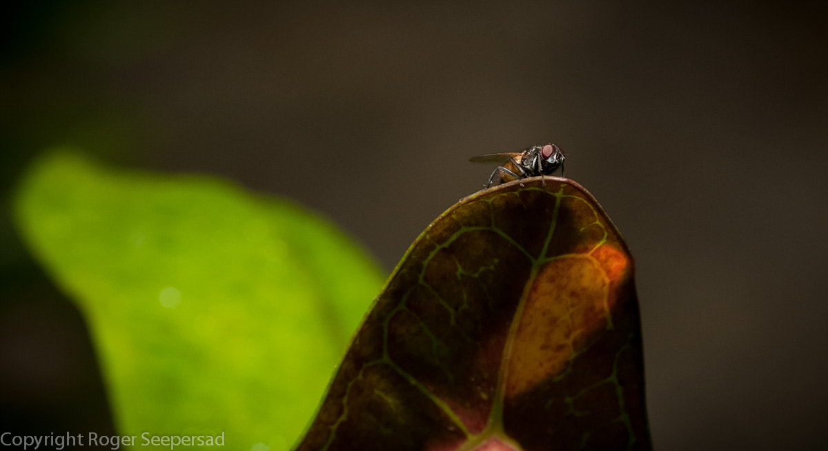 Photograph The fly on the wall by Roger Seepersad on 500px