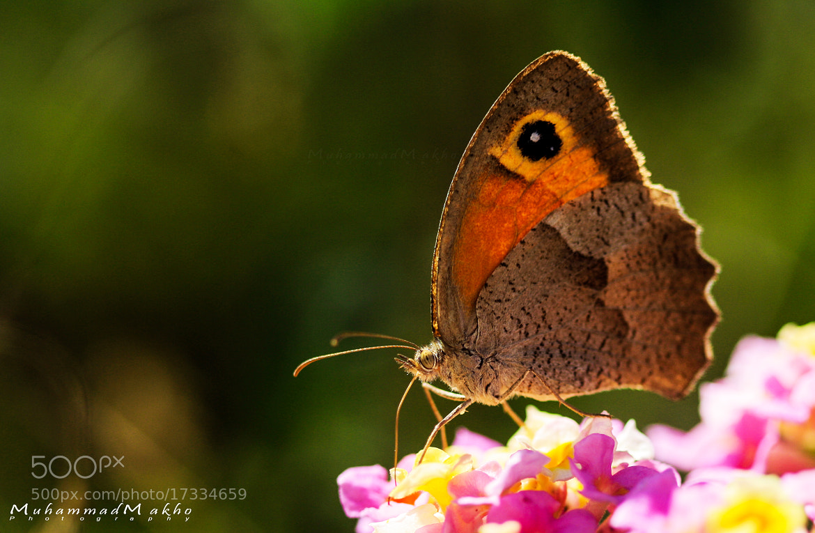 Photograph Butterfly by Muhammad Makho on 500px