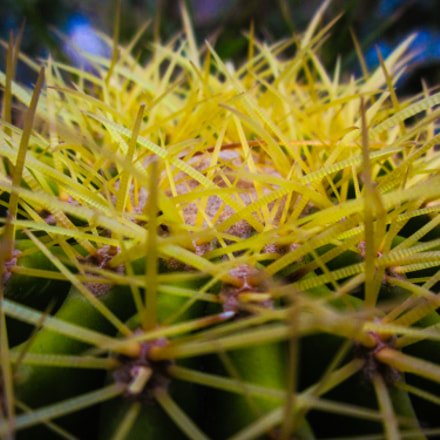 Spines Everywhere, Canon POWERSHOT A1200