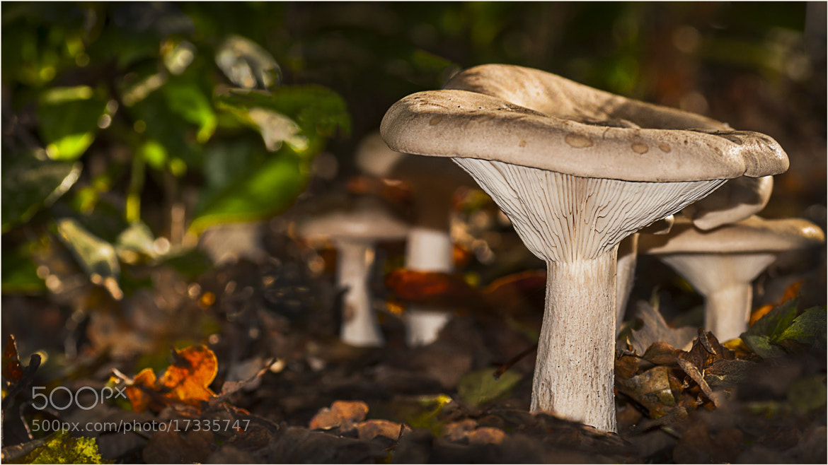Photograph Forest Floor Fungi by Mark Shoesmith on 500px