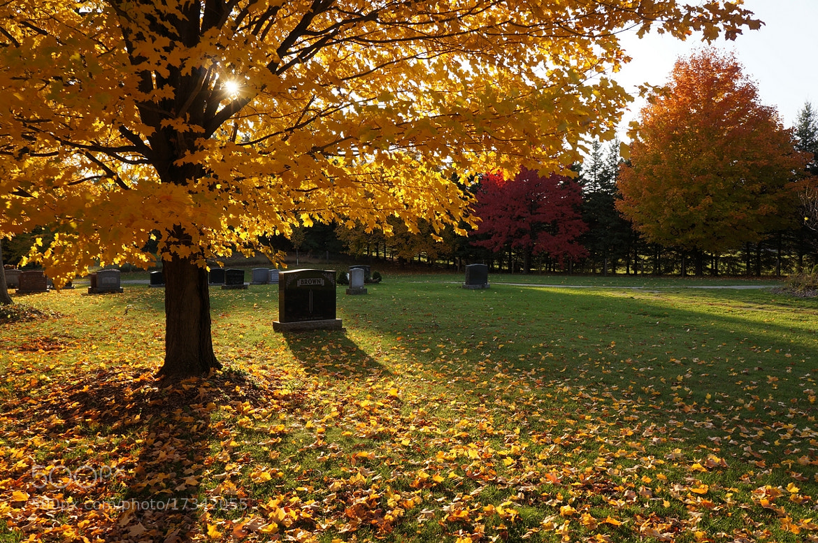 Photograph Fall Follage 3 by Dan Harmer on 500px