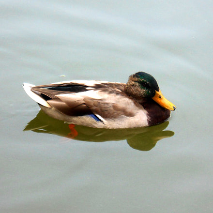Important Duck, Nikon COOLPIX S4400