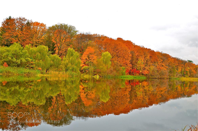 Photograph Reflection by Diana Zlamalik on 500px