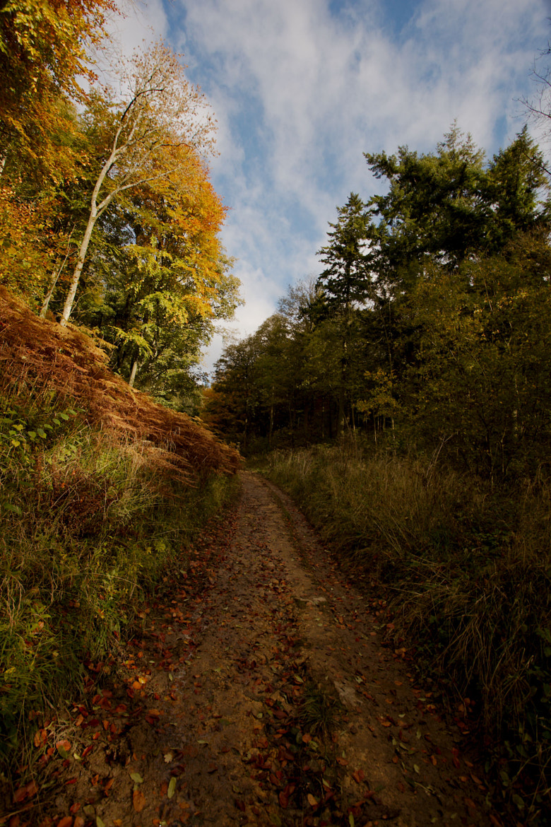 Photograph Autumn path by Fred Gates on 500px