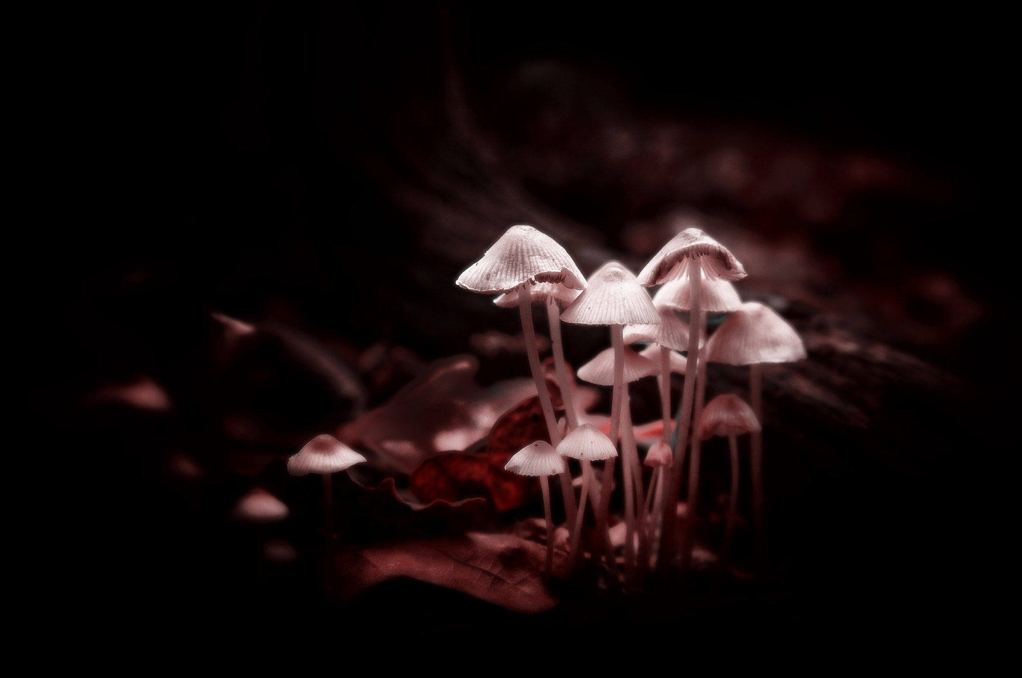 Photograph Shrooms by Phil Martin on 500px