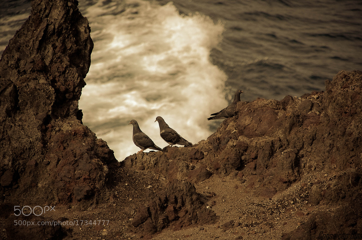 Photograph Seabirds of the Azorean islands by Conceição Dias on 500px