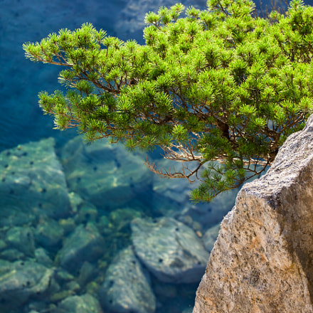Pine-tree on a rock, Canon EOS 5D MARK II, Canon EF 100-300mm f/5.6L