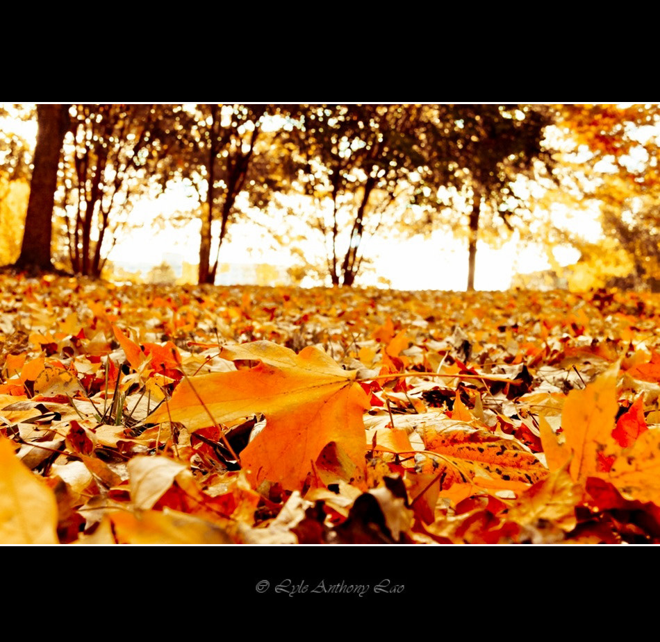 Photograph Autumn by Lyle Anthony Lao on 500px