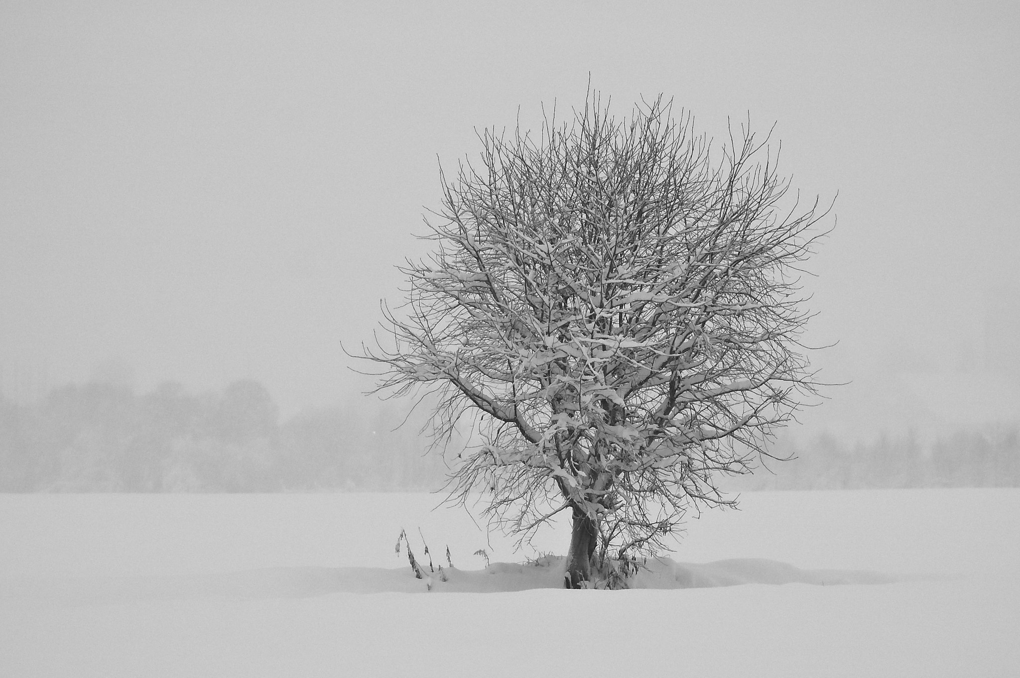 Photograph Tree in snow by Kolbein Svensson on 500px