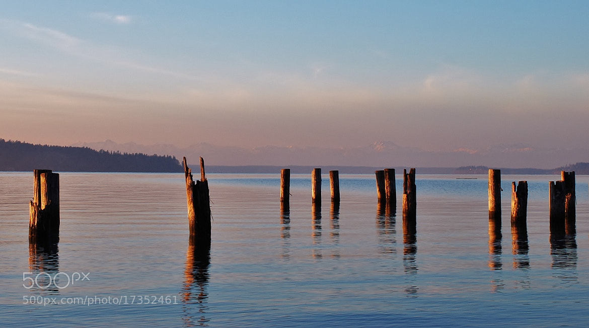 Photograph Pilings at Sunyside by John Mullinax on 500px