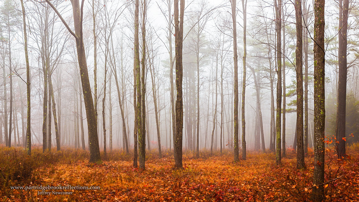 Photograph Endless Glade by Jeffrey Newcomer on 500px
