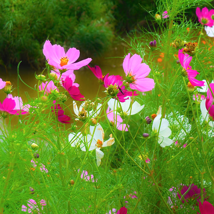 cosmos with the most, Nikon COOLPIX S6400