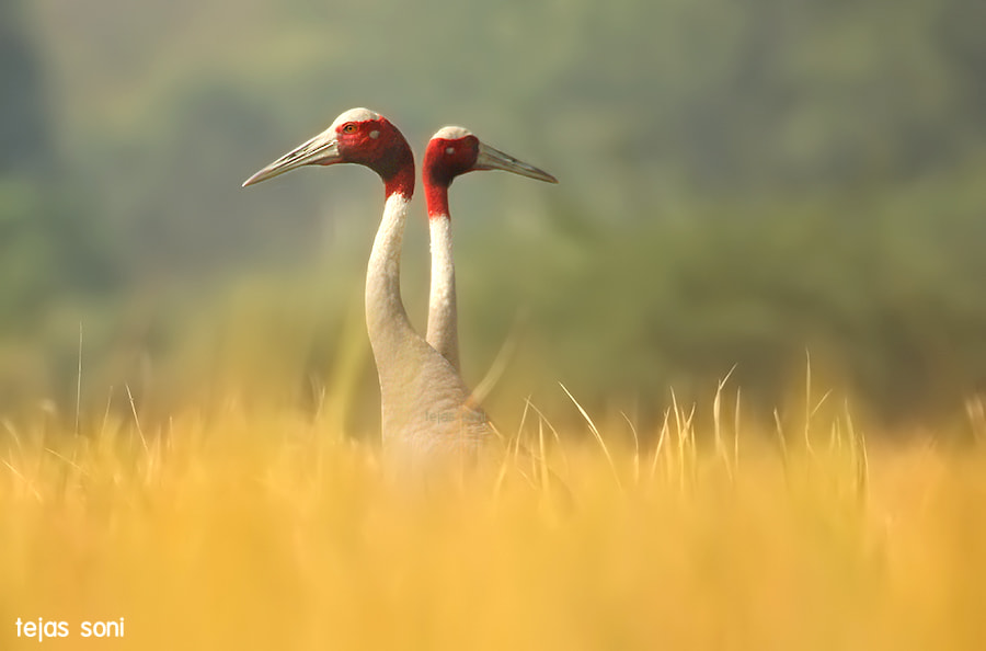 "Photograph ""divine couple"" by Tejas Soni on 500px"