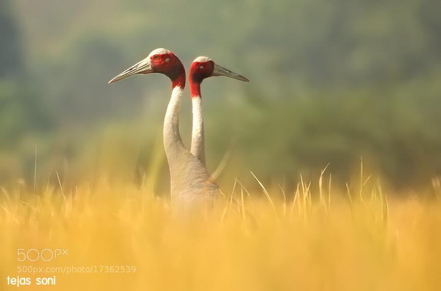 """divine couple"" by Tejas Soni on 500px.com"