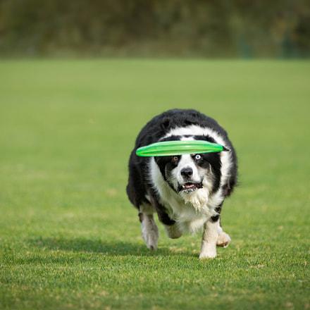 Dutch - Chasing down a Frisbee