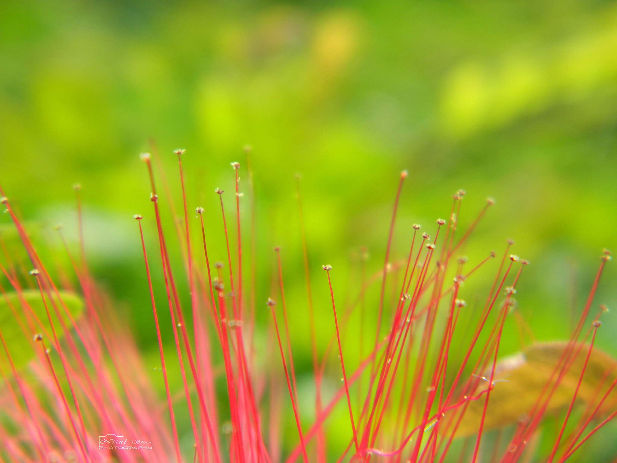 Photograph Tiny Red... by Nitul Shah on 500px