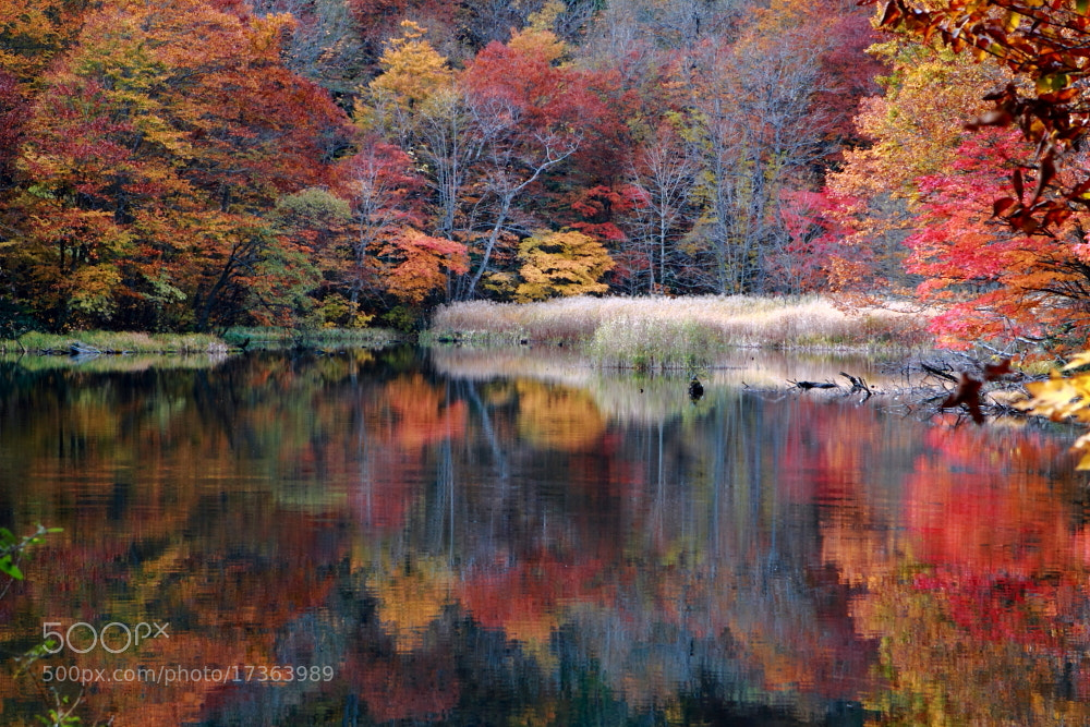 Photograph Happy Autumn!  by Shihya Kowatari on 500px