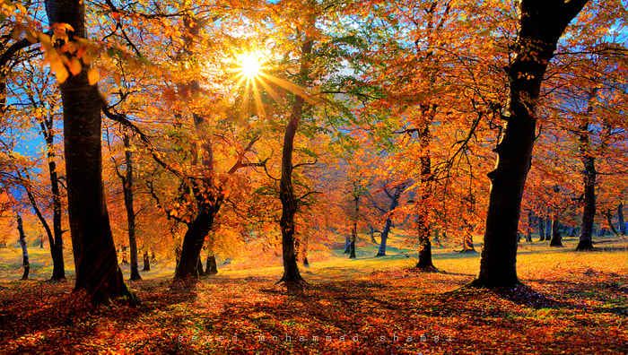 Photograph AUTUMNAL LIGHT by Seyed Mohammad  Shamsi on 500px