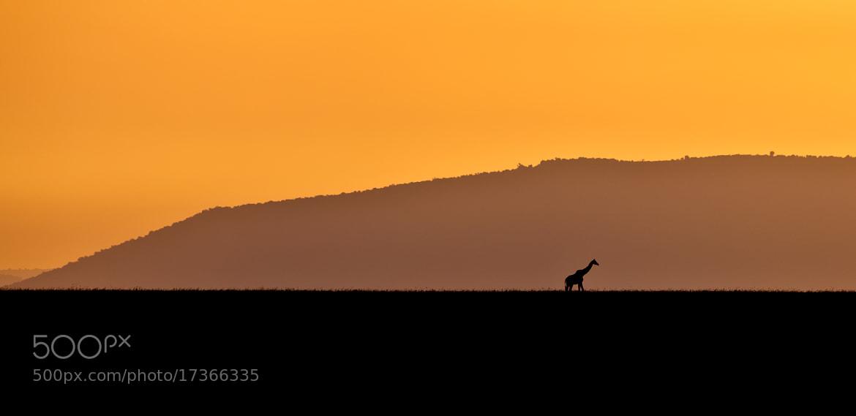 Photograph Sundowner Giraffe by Reto Bühler on 500px