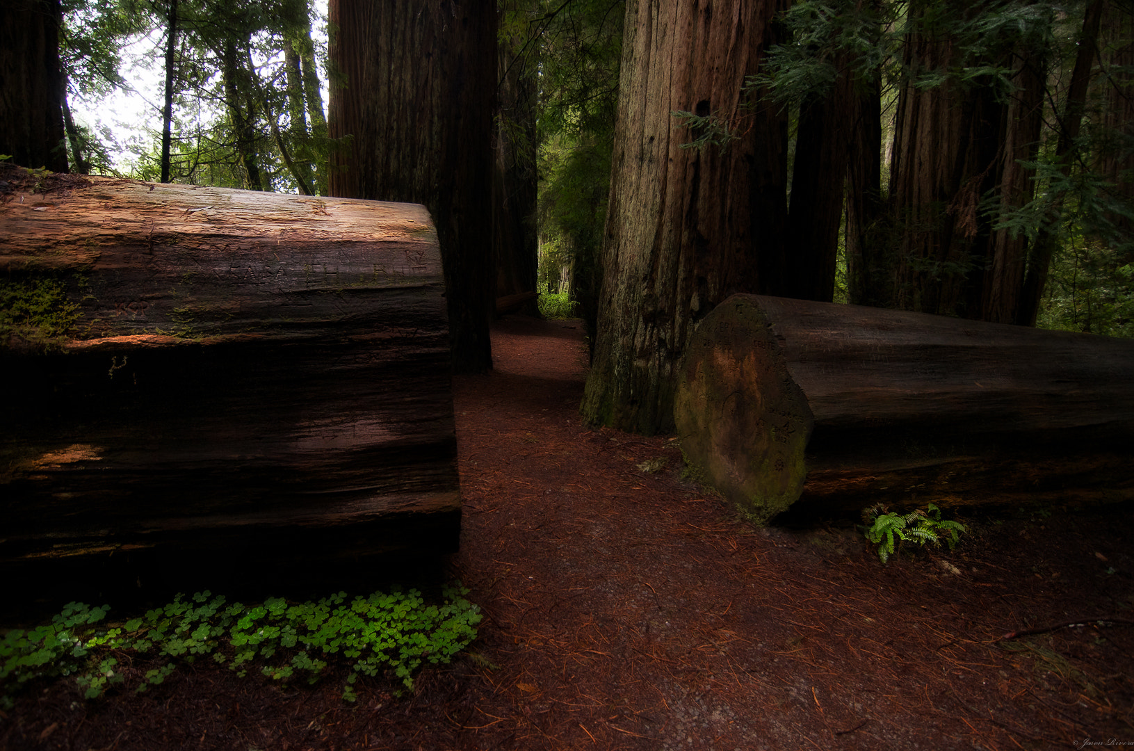 Photograph Redwood Sequoia National Park by Jason Rivera on 500px