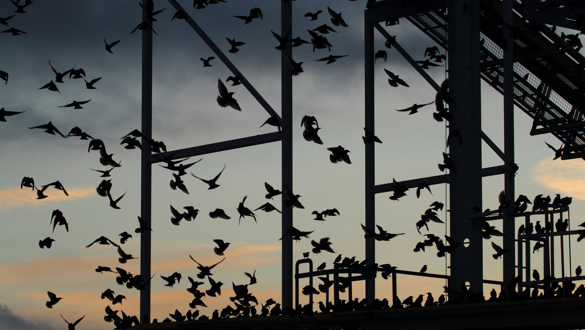 Photograph roost in silhouette by Lee Crawley  on 500px