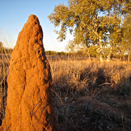 Termite Mound, Canon POWERSHOT SD800 IS