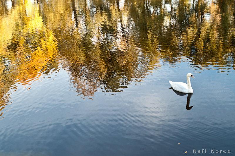 Autum reflection