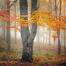 AUTUMN by Tomáš Morkes (Morkes)) on 500px.com