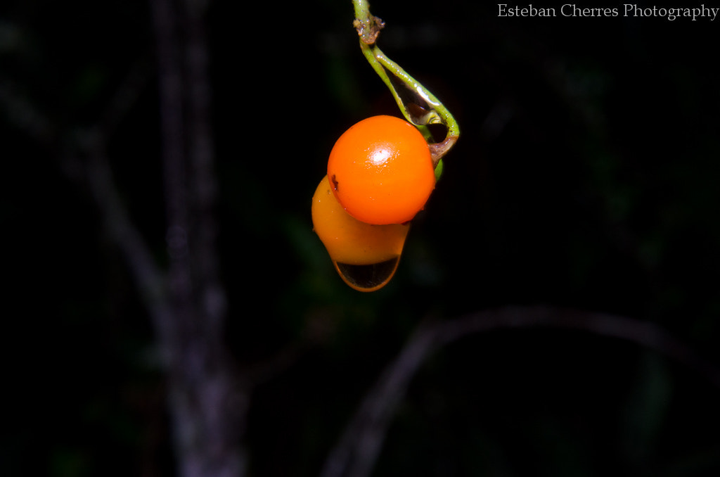 Photograph small fruit by Esteban Cherres on 500px