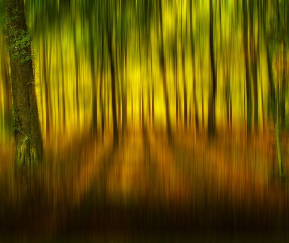 Photograph autumn dream by Mike Janik on 500px