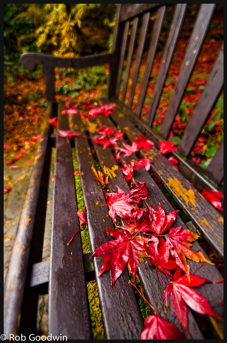 Photograph Red is the Colour by Rob Goodwin on 500px
