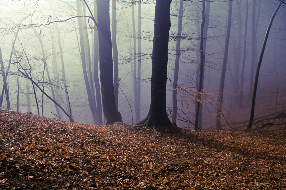 Photograph Fairy tail by Domen  Dolenc on 500px
