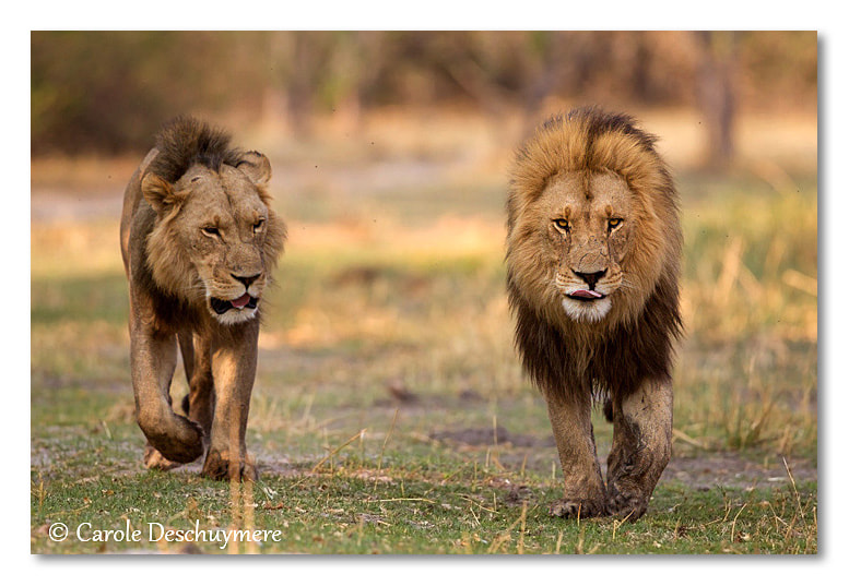 Photograph Two brothers by Deschuymere Carole on 500px
