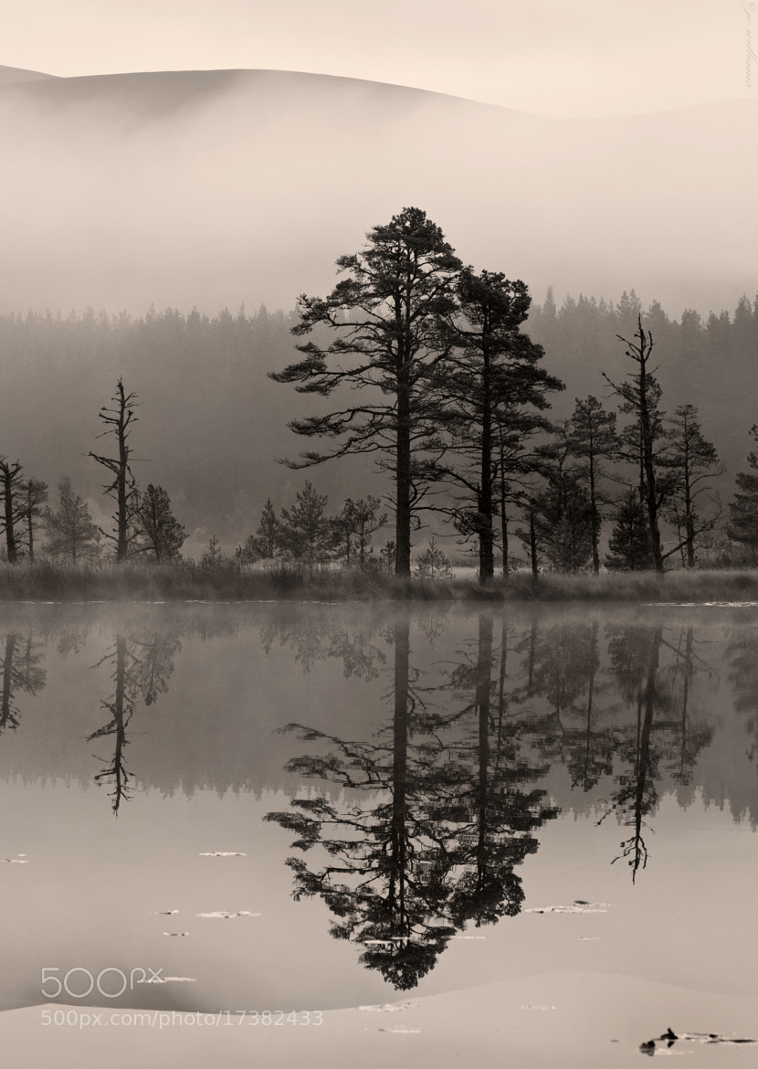 Photograph A State of Silence by jo williams on 500px