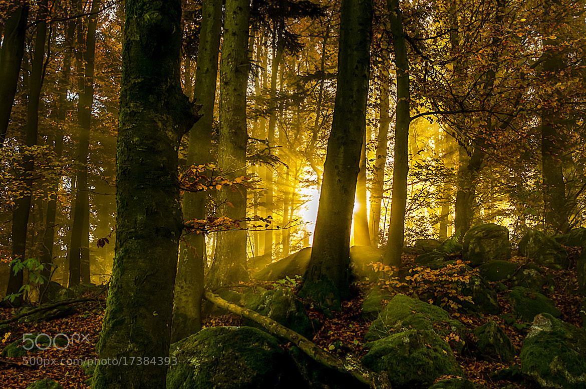 Photograph Sonnenstrahlendurchflutet by Leo Pöcksteiner on 500px