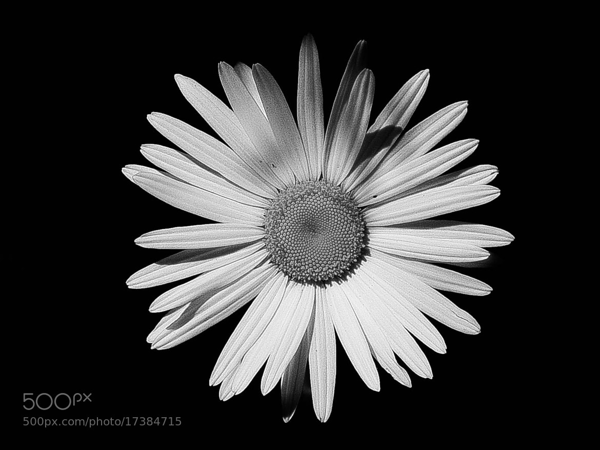 Photograph Simple by Daniela Niederbauer on 500px