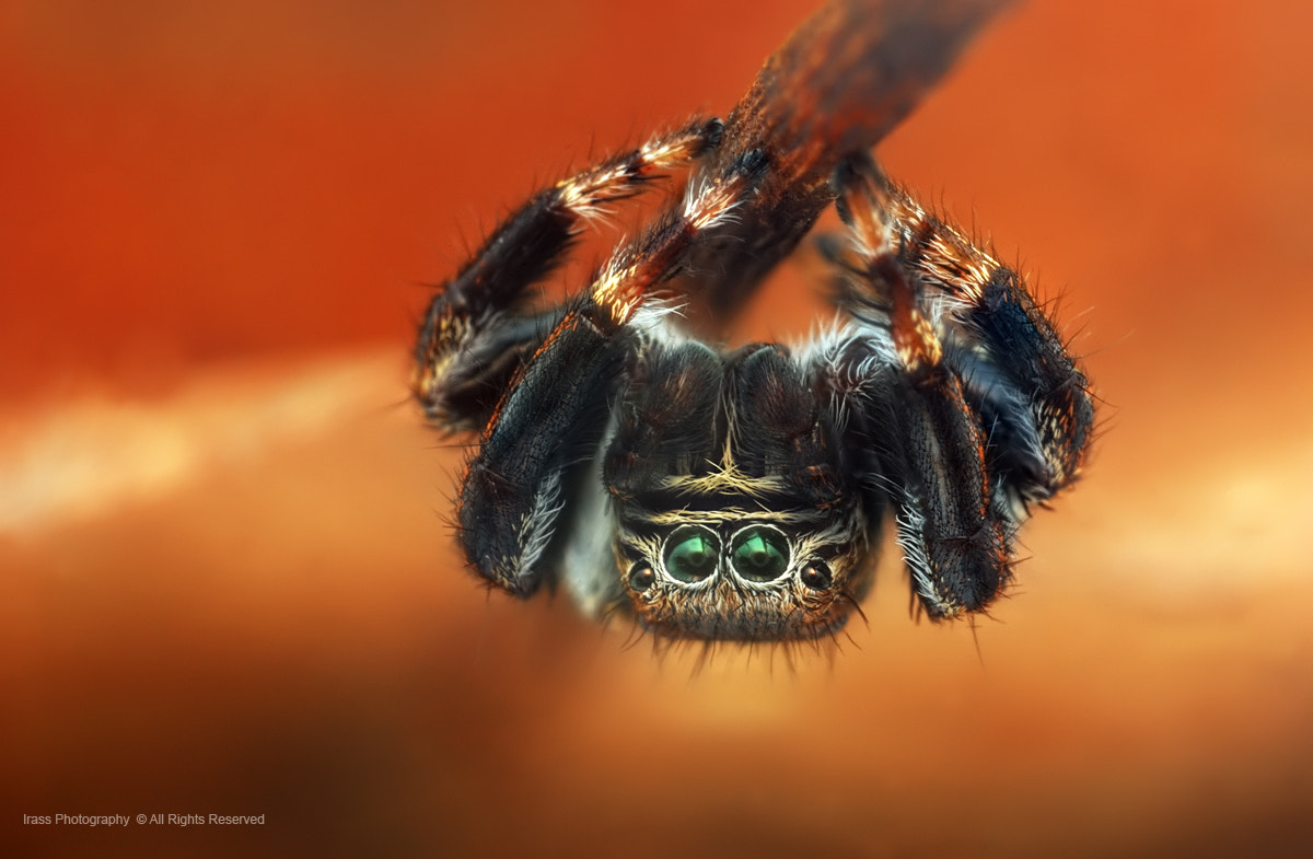 Photograph Spider-Man. by ireneusz irass walędzik on 500px