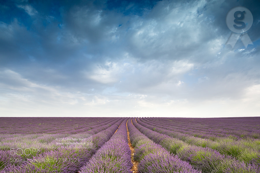 Photograph Lavender field (July 2012) by michele berti on 500px