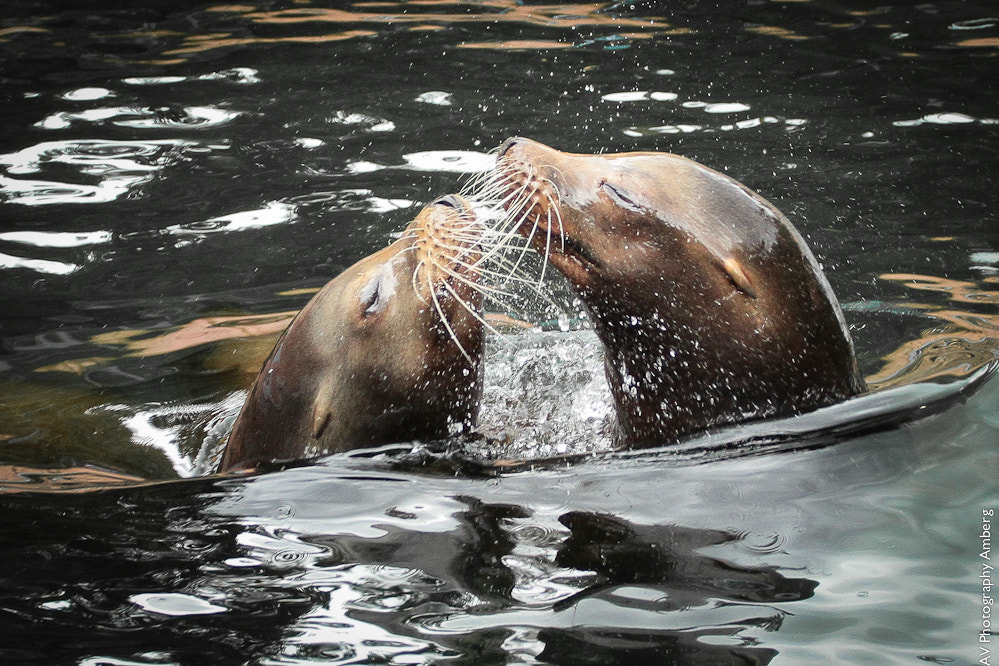 Photograph KISS by Alex Viebig on 500px