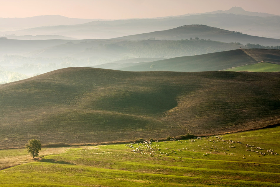 Photograph Sheeps by Marcin Sobas on 500px