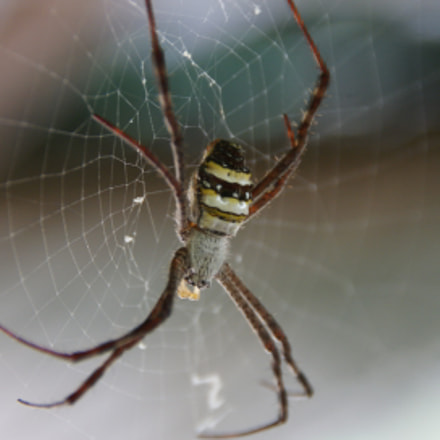 Spider, Sony DSLR-A300, Tamron AF 18-200mm F3.5-6.3 XR Di II LD Aspherical [IF] Macro