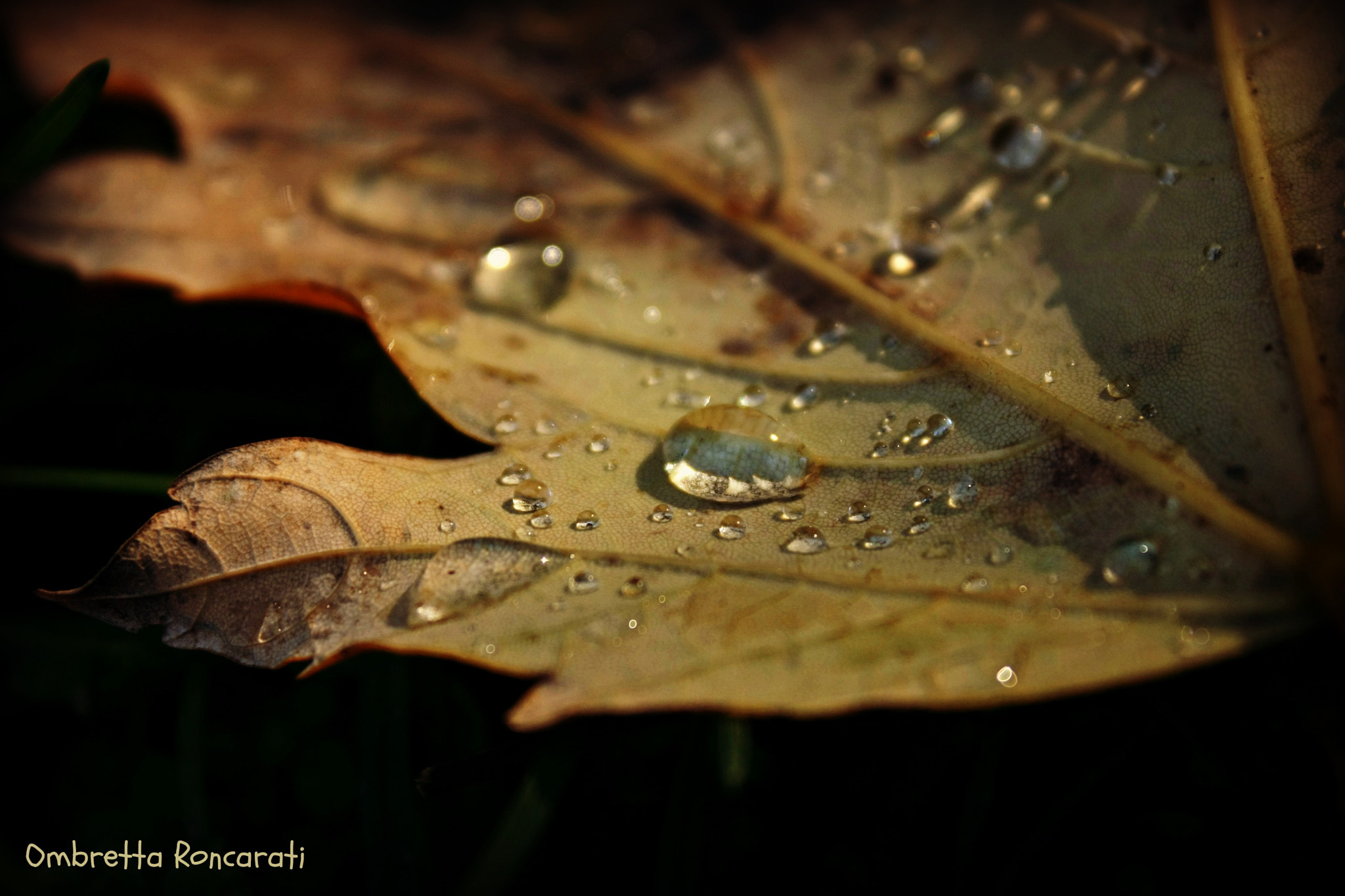 Photograph after the rain by ombretta  roncarati on 500px